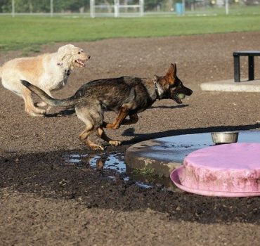 Attacked at the Dog Park? Liability Waivers May Not Apply
